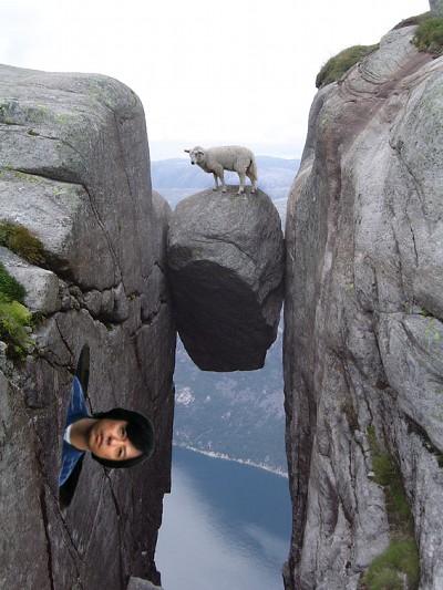画像加工出来る人、羊さんを助けて-118