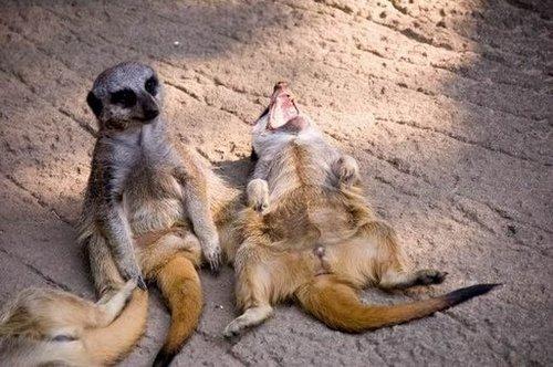 可愛い動物の画像が貼られるスレ-021_4