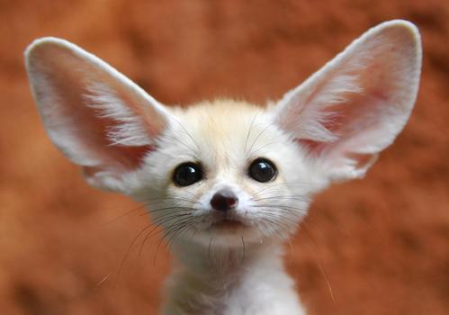 可愛い動物の画像が貼られるスレ-059