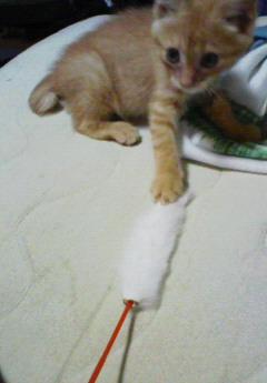 子猫を拾った話をする 画像もつける-055_3