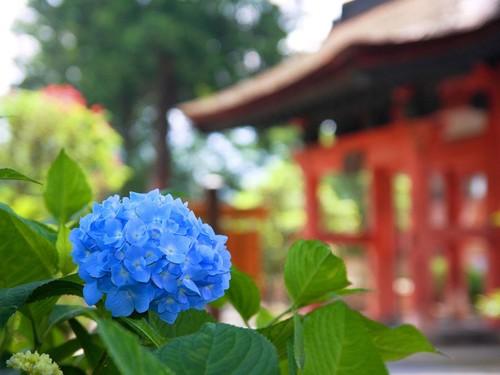 日本の綺麗な画像を貼っていこう-033_1