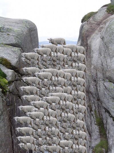 画像加工出来る人、羊さんを助けて-075