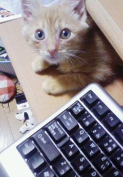 子猫を拾った話をする 画像もつける-061_1