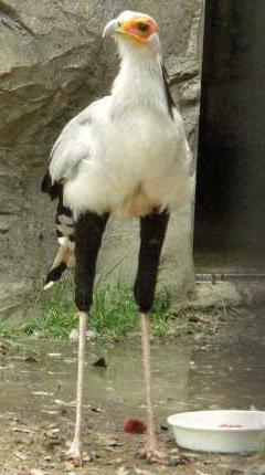 可愛い動物の画像が貼られるスレ-072