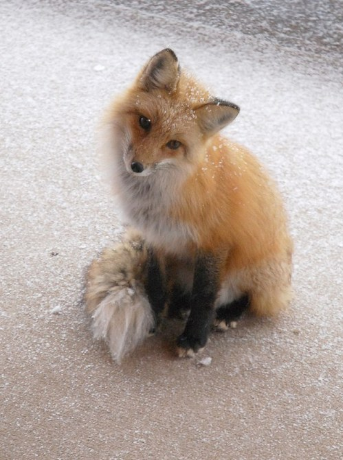 可愛い動物の画像が貼られるスレ-038