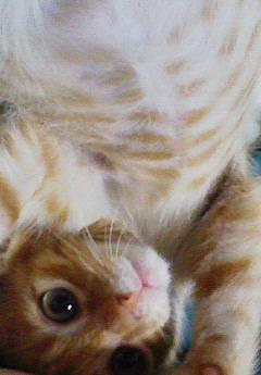 子猫を拾った話をする 画像もつける-072_3