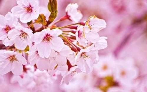 日本の綺麗な画像を貼っていこう-033_3