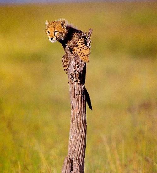 可愛い動物の画像が貼られるスレ-036_2