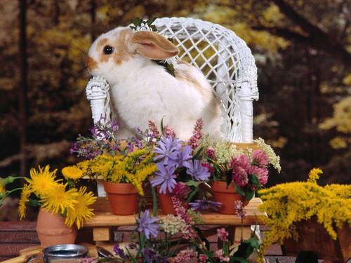 可愛い動物の画像が貼られるスレ-064_2