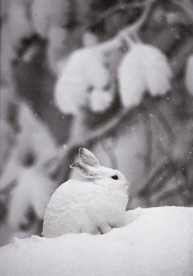 可愛い動物の画像が貼られるスレ-001