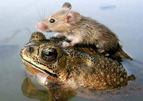 可愛い動物の画像が貼られるスレ-026_1