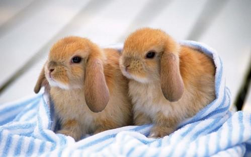 可愛い動物の画像が貼られるスレ-029_1