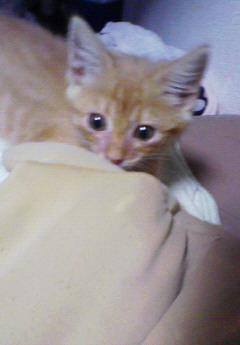 子猫を拾った話をする 画像もつける-039_1