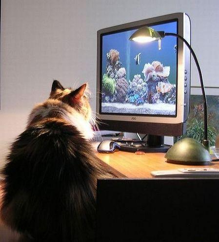 動物の画像でも貼ろうか-012_2