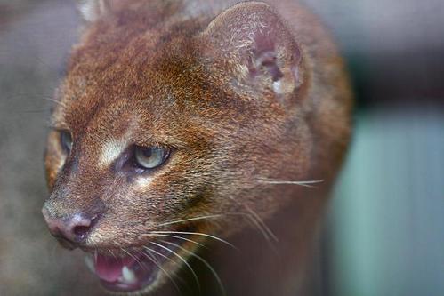 可愛い動物の画像が貼られるスレ-037_1
