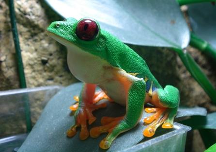 可愛い動物の画像が貼られるスレ-053_2