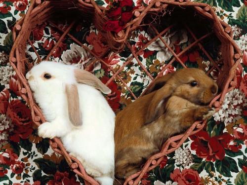 可愛い動物の画像が貼られるスレ-064_4