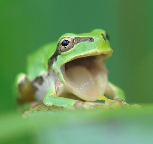 可愛い動物の画像が貼られるスレ-009_1