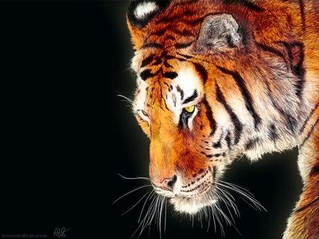 動物の画像でも貼ろうか-016_1