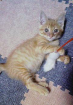 子猫を拾った話をする 画像もつける-055_4