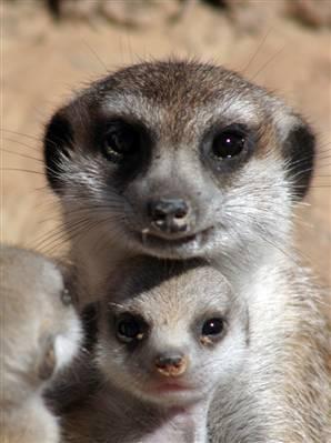 動物の子供の画像をはるスレ-030