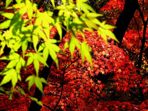 日本の綺麗な画像を貼っていこう-034_4