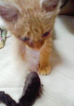 子猫を拾った話をする 画像もつける-031