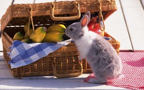 可愛い動物の画像が貼られるスレ-029_2