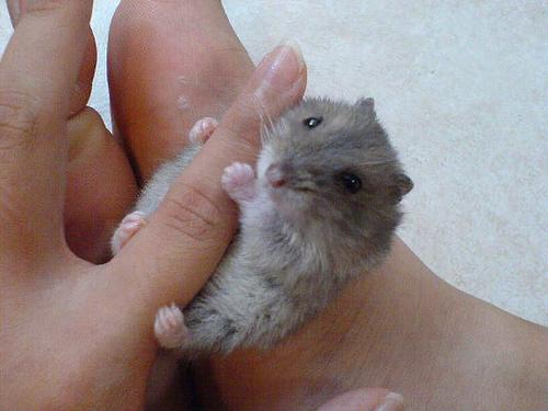 可愛い動物の画像が貼られるスレ-020