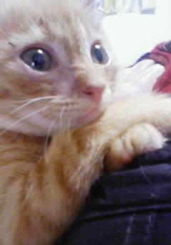 子猫を拾った話をする 画像もつける-053_1