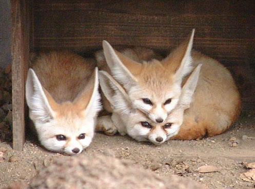 可愛い動物の画像が貼られるスレ-044