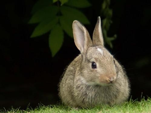 可愛い動物の画像が貼られるスレ-031_2