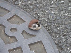 可愛い動物の画像が貼られるスレ-027