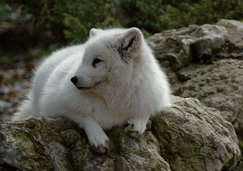 狐の画像ください-031