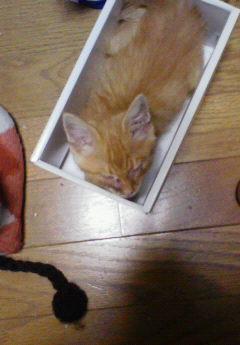子猫を拾った話をする 画像もつける-036_2