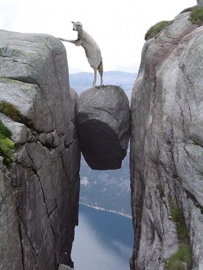 画像加工出来る人、羊さんを助けて-107