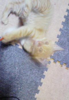 子猫を拾った話をする 画像もつける-067_1