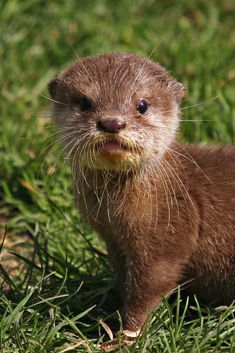 可愛い動物の画像が貼られるスレ-011_1