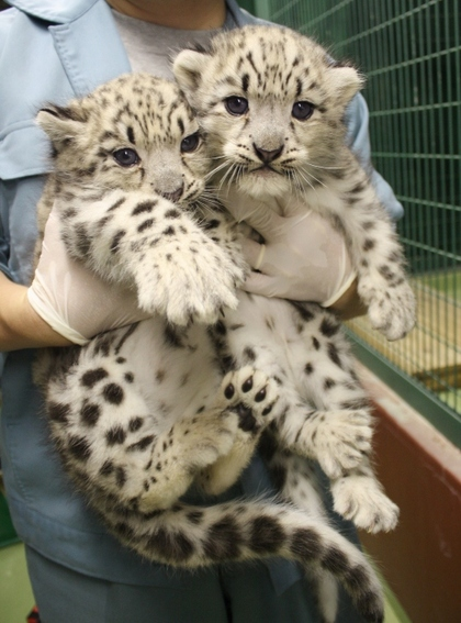 可愛い動物の画像が貼られるスレ-036_4