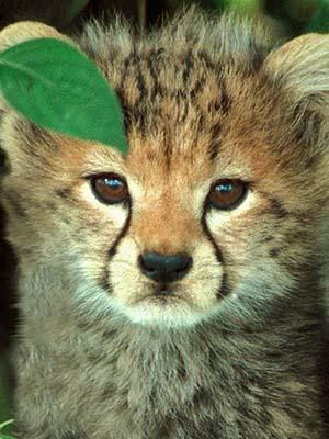 可愛い動物の画像が貼られるスレ-036_1