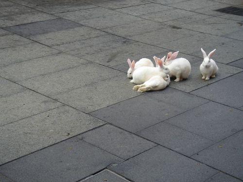 可愛い動物の画像が貼られるスレ-028_2