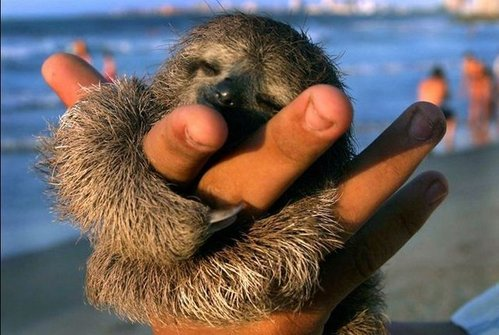 可愛い動物の画像が貼られるスレ-021_1