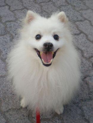 柴犬より可愛い犬種って存在するの-079