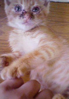 子猫を拾った話をする 画像もつける-036_1