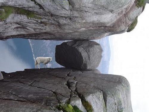 画像加工出来る人、羊さんを助けて-067