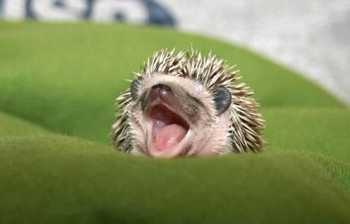 可愛い動物の画像が貼られるスレ-021_2