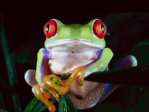 可愛い動物の画像が貼られるスレ-058_1