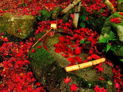 日本の綺麗な画像を貼っていこう-038_2
