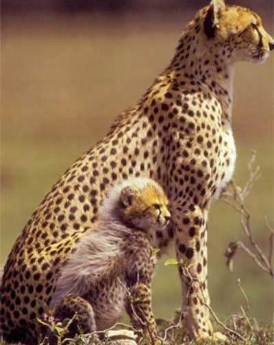 可愛い動物の画像が貼られるスレ-036_3