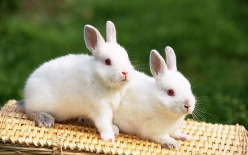 可愛い動物の画像が貼られるスレ-031_1